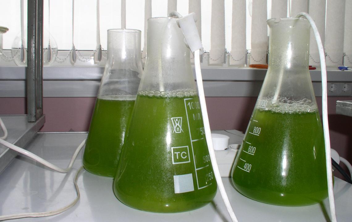 Биотестирование отходов